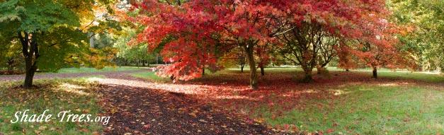 iStock_orange-leaves-green-leaves-lawn-panarama.jpg