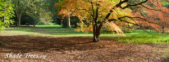 iStock_orange-red-leaves-multi-trees-park.jpg