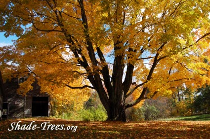 iStock_yellow-leaves-large-tree-park.jpg