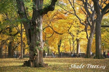 iStock_yellow-leaves-park-large-trunk-people.jpg