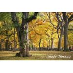 iStock_yellow-leaves-park-large-trunk-people.jpg